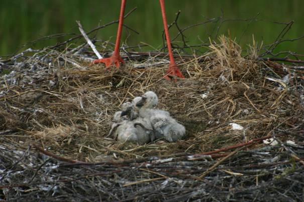mei alle vogels leggen een ei